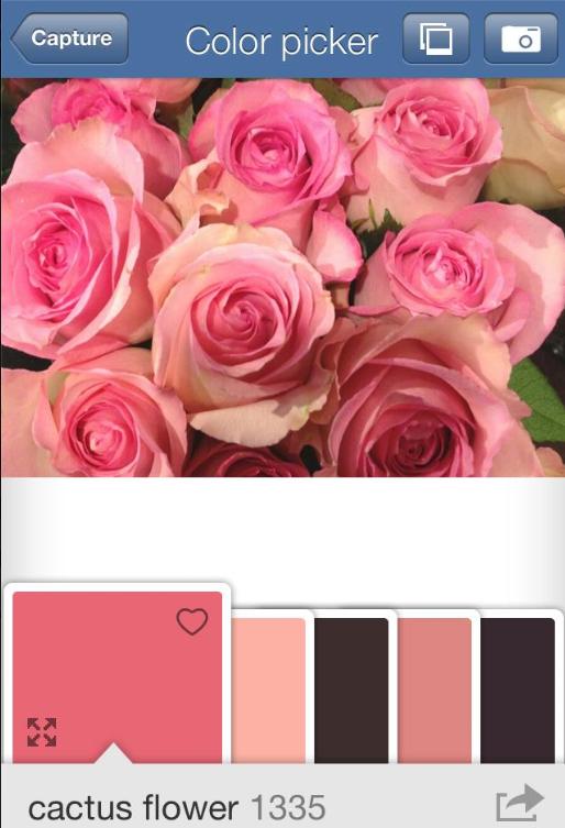 Benjamin-Moore-Color-capture-4-Cactus-Flower